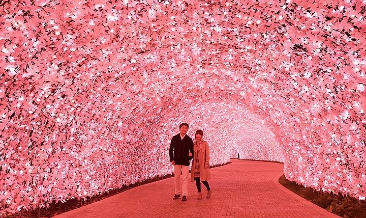 イルミ_トンネル桜.jpg