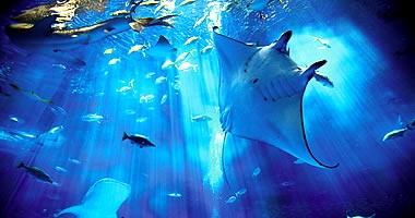 【沖縄1日観光バス】ラド美ら海号沖縄美ら海水族館入館券付き