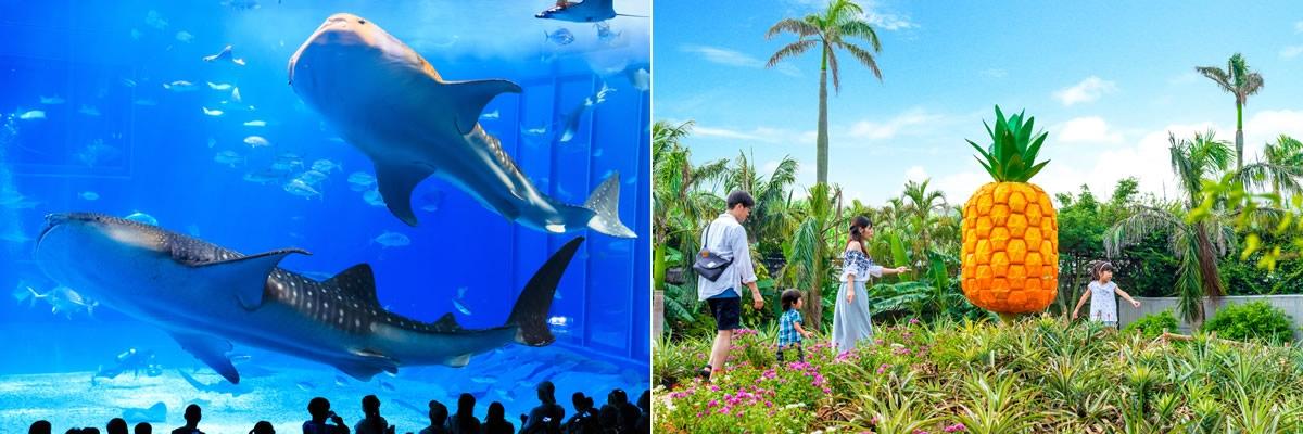 沖縄1日観光バスツアー|ラド美ら海号